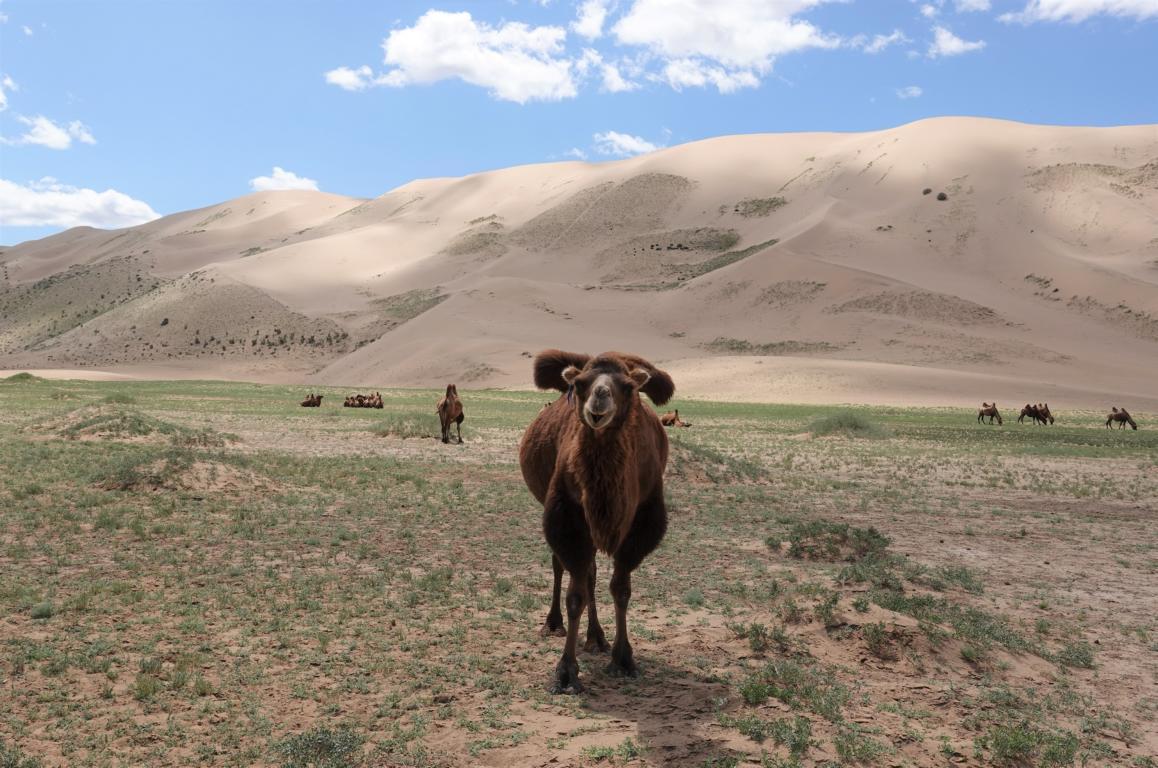 Die Wüste Gobi