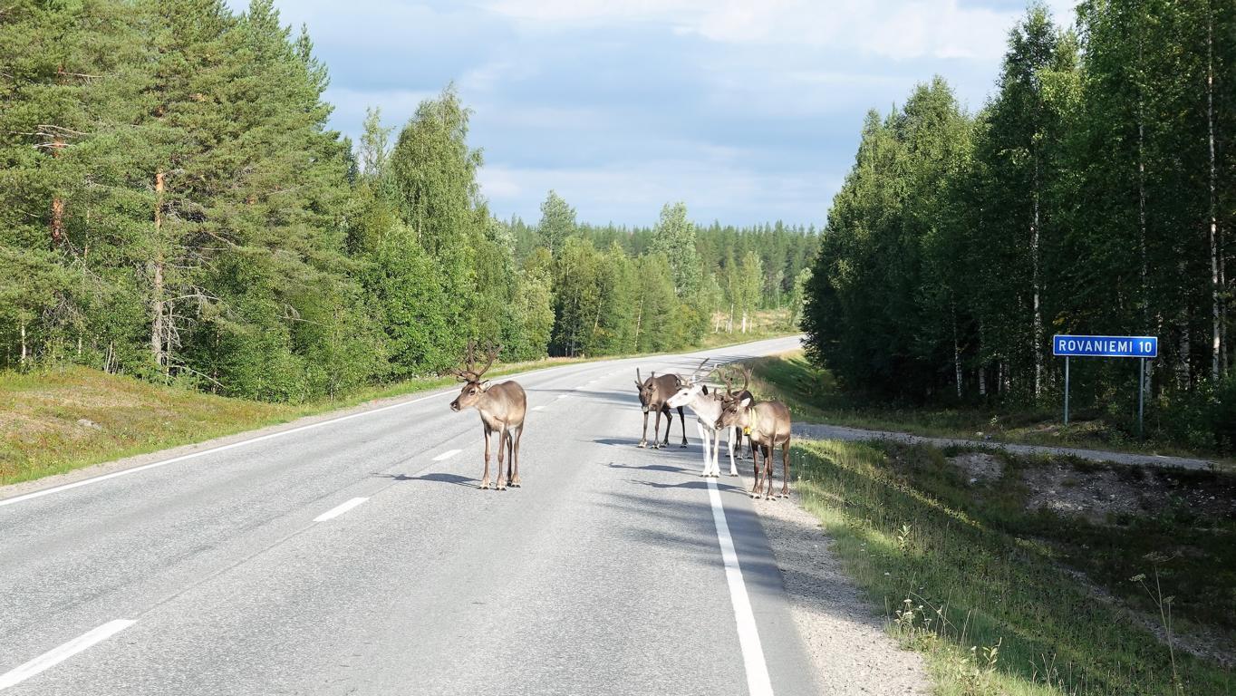Der Sommer geht zu Ende in Lappland