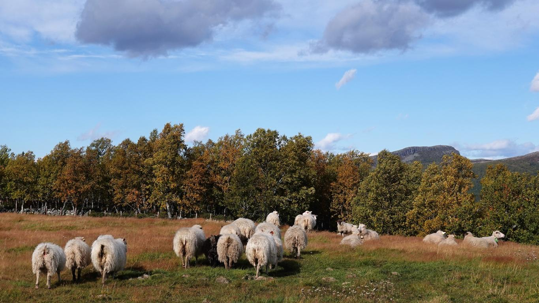 Besuch bei Freunden in Norwegen